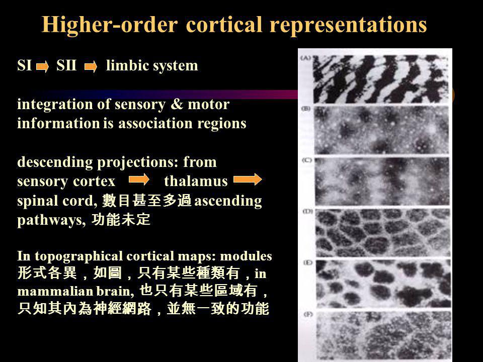 Higher-order cortical representations