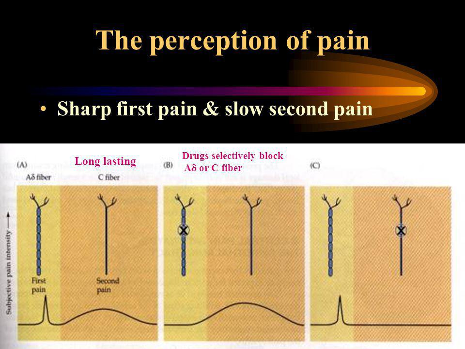 The perception of pain Sharp first pain & slow second pain