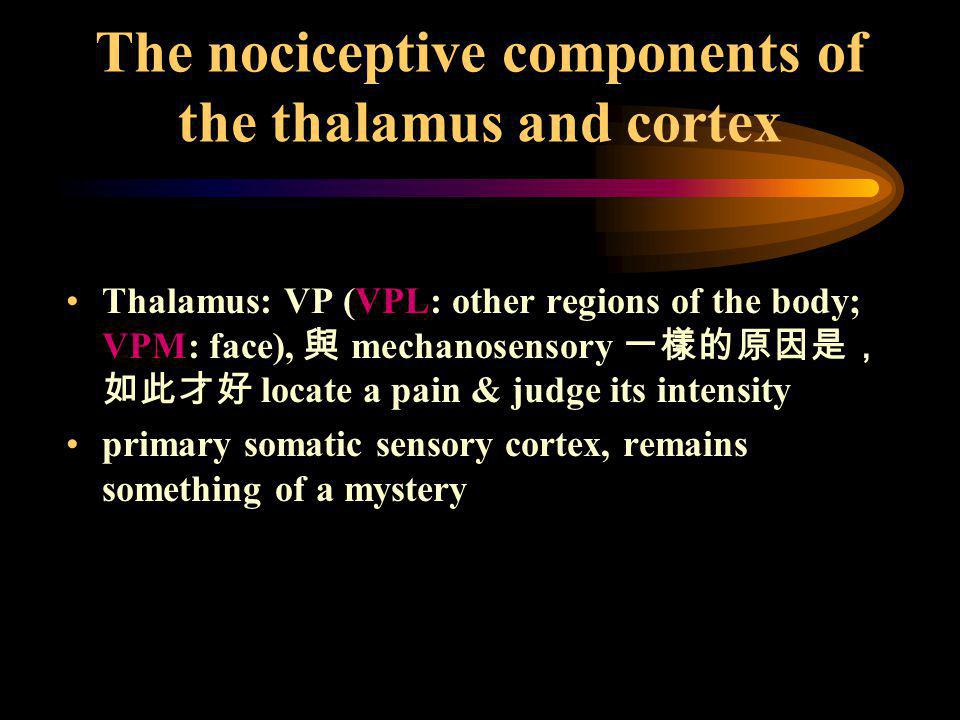 The nociceptive components of the thalamus and cortex