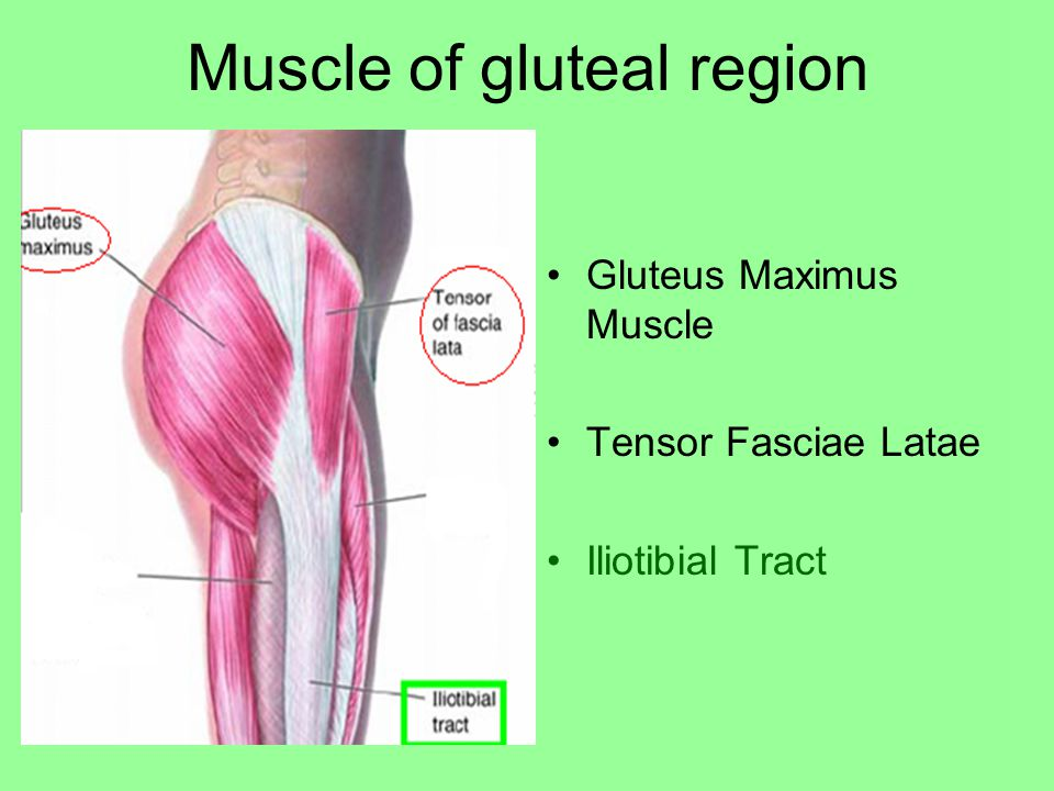Muscle of gluteal region