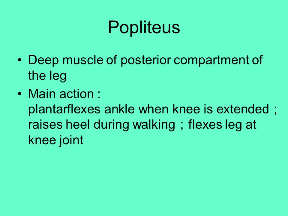 Popliteus Deep muscle of posterior compartment of the leg