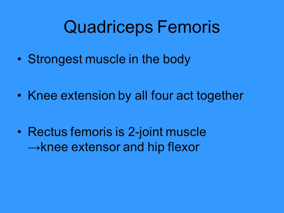 Quadriceps Femoris Strongest muscle in the body