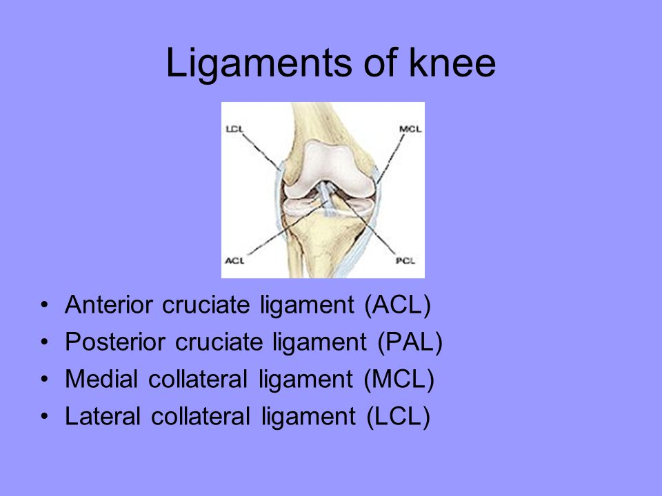 Ligaments of knee Anterior cruciate ligament (ACL)
