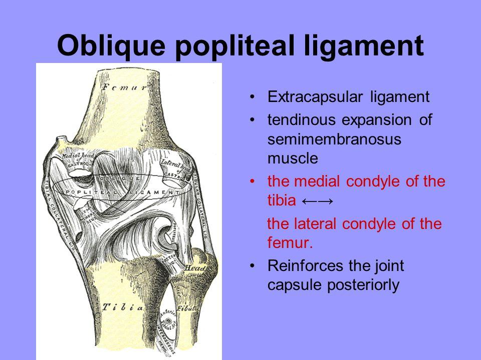 Oblique popliteal ligament