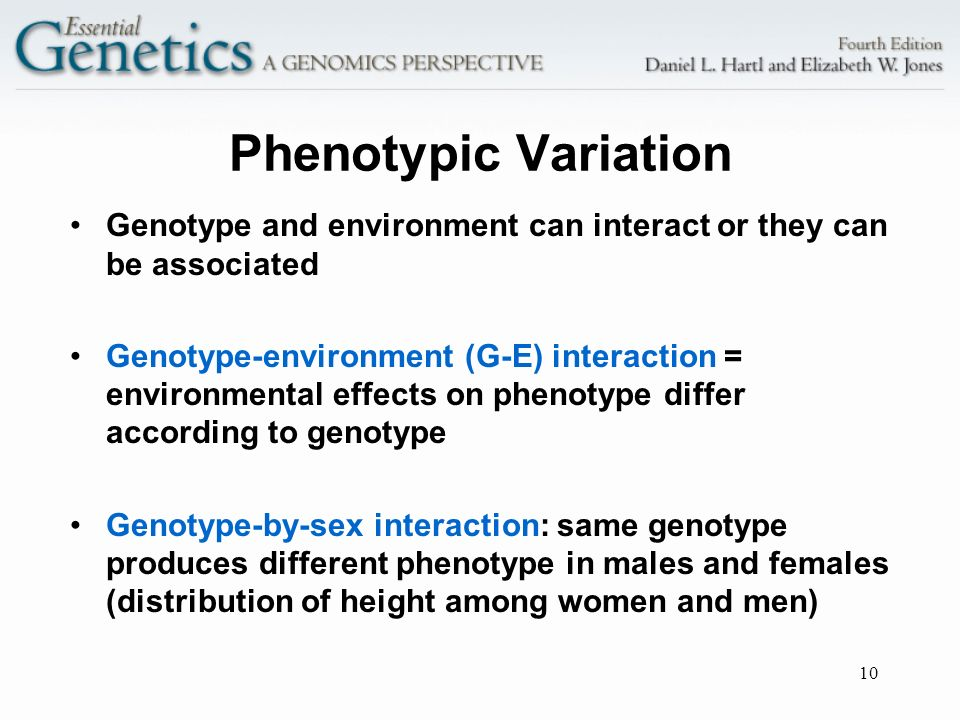 Phenotypic Variation Genotype and environment can interact or they can be associated.