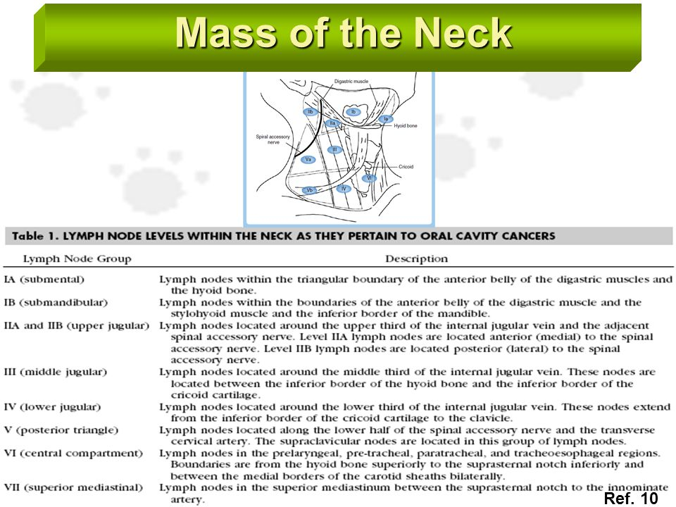 Mass of the Neck Ref. 10