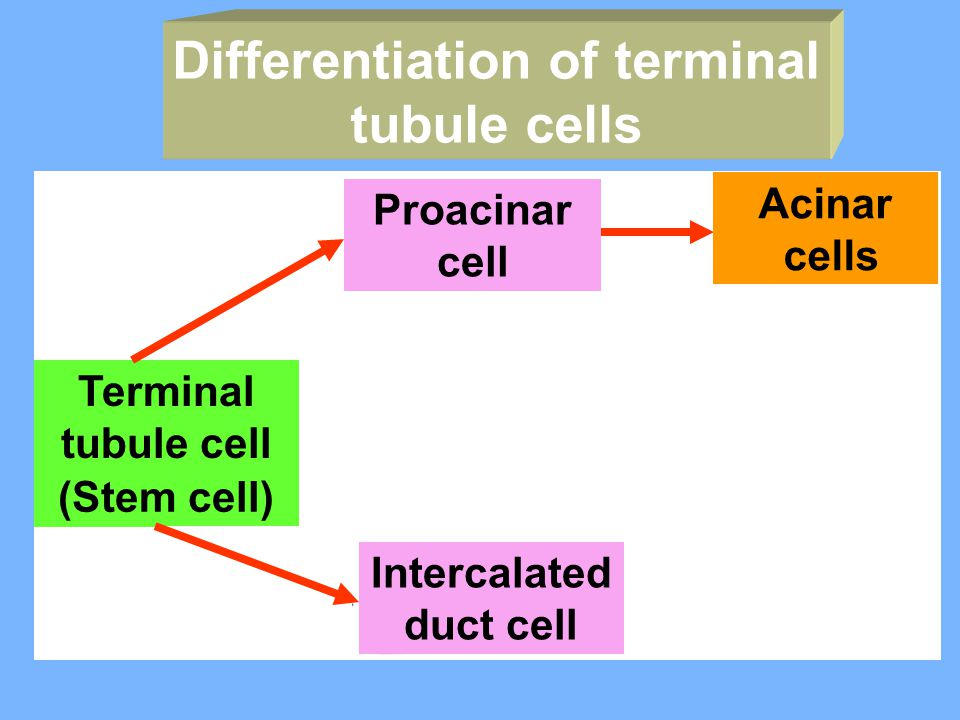 Differentiation of terminal