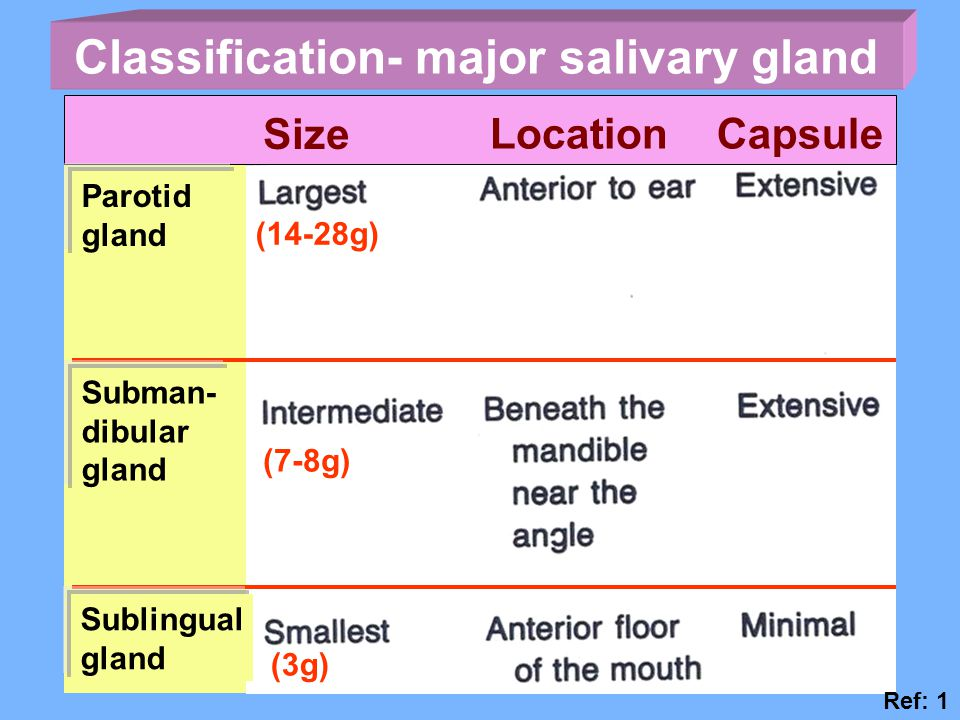 Classification- major salivary gland
