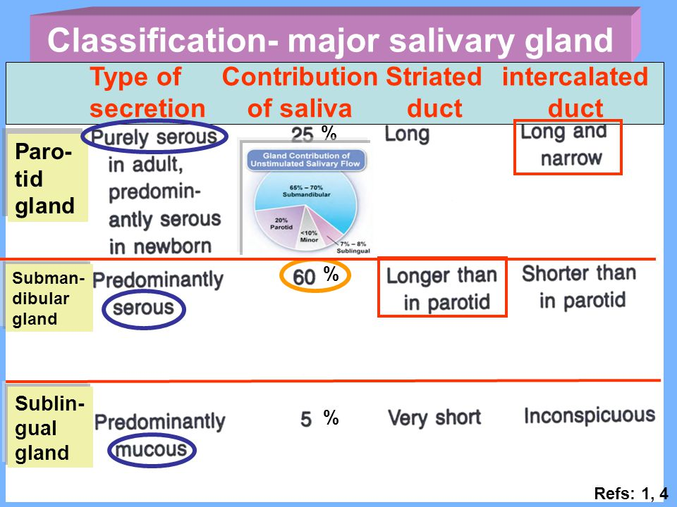 Classification- major salivary gland Contribution of saliva