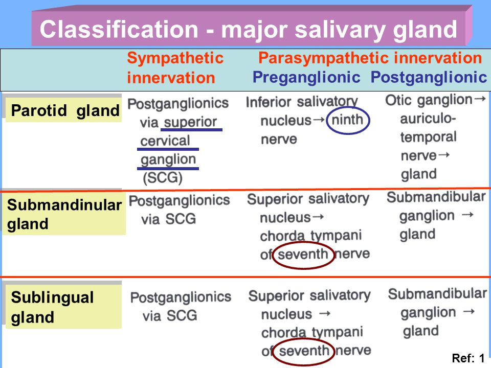 Classification - major salivary gland