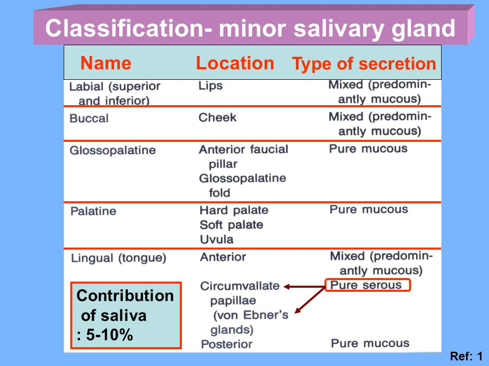 Classification- minor salivary gland