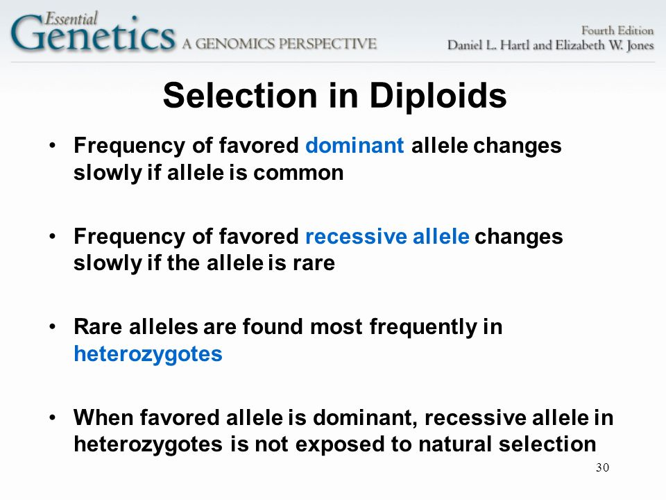Selection in Diploids Frequency of favored dominant allele changes slowly if allele is common.