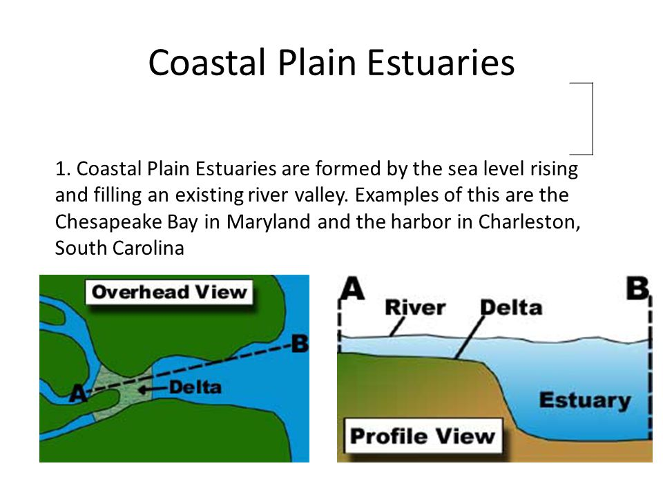 Coastal Plain Estuaries