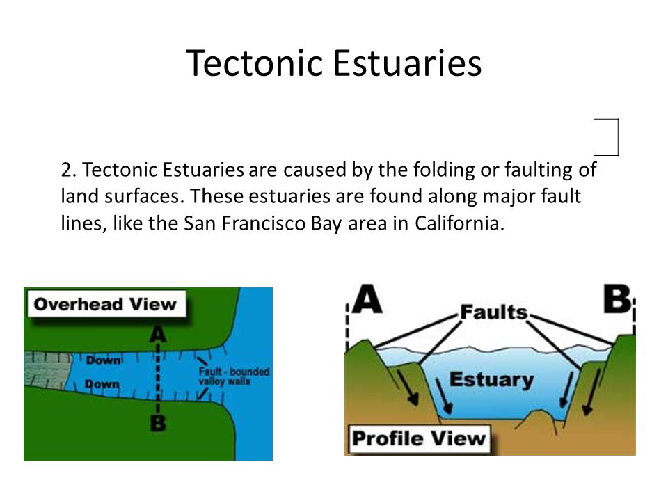 Tectonic Estuaries