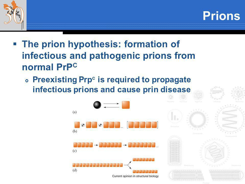 Prions The prion hypothesis: formation of infectious and pathogenic prions from normal PrPC.