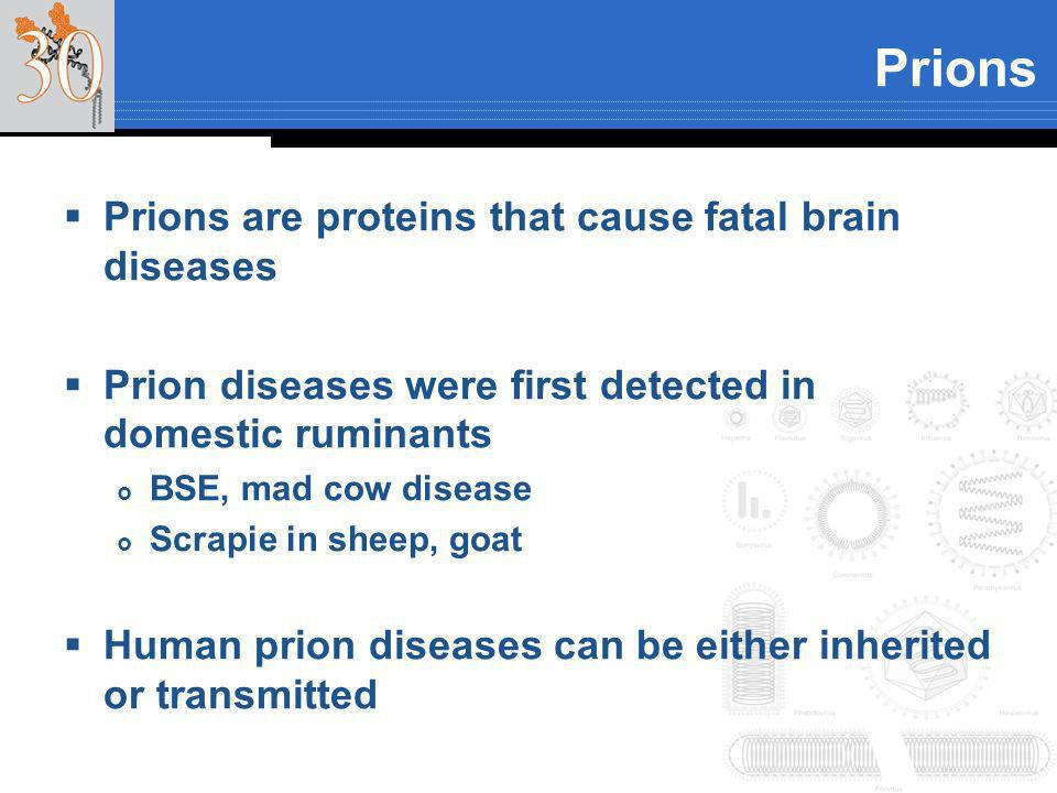 Prions Prions are proteins that cause fatal brain diseases