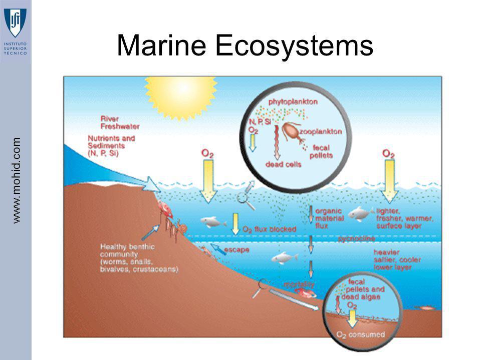 Marine Ecosystems BEST – IST, 2006