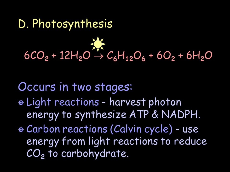 D. Photosynthesis Occurs in two stages: