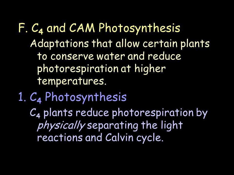 F. C4 and CAM Photosynthesis