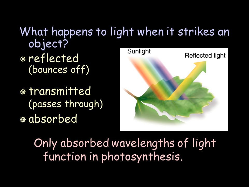 What happens to light when it strikes an object