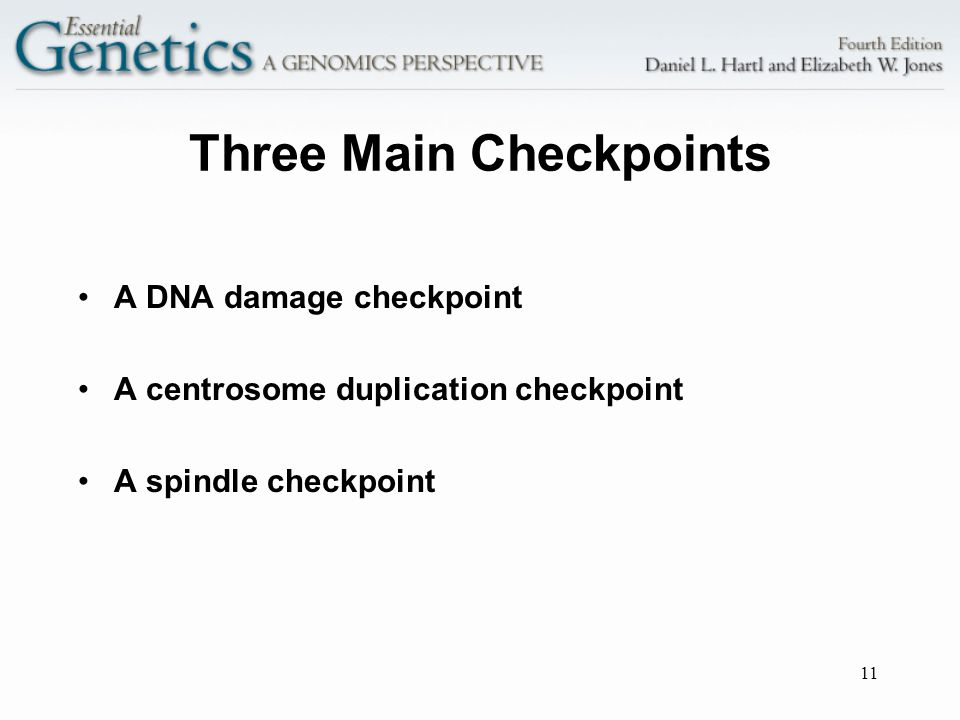 Three Main Checkpoints