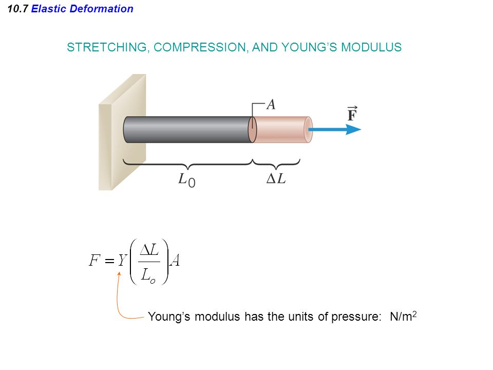 STRETCHING, COMPRESSION, AND YOUNG'S MODULUS