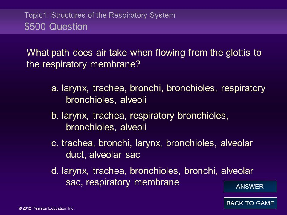 Topic1: Structures of the Respiratory System $500 Question
