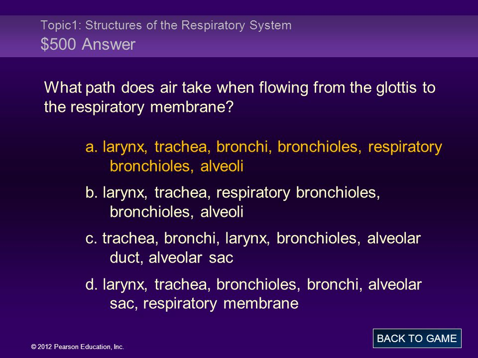 Topic1: Structures of the Respiratory System $500 Answer