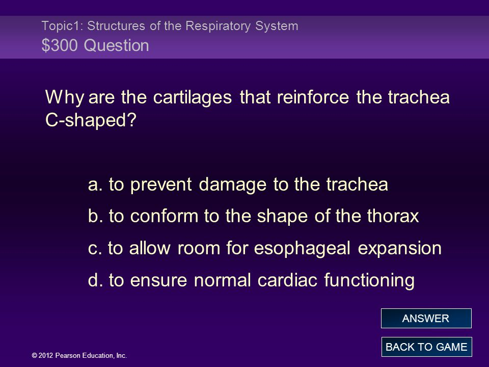 Topic1: Structures of the Respiratory System $300 Question