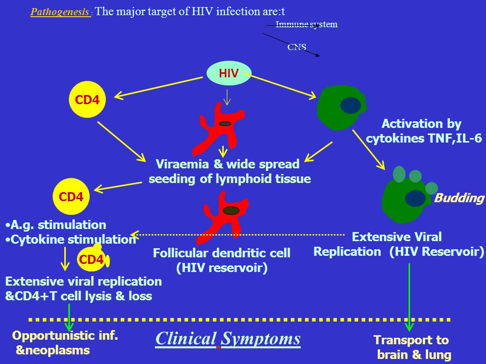 Clinical Symptoms HIV CD4 Activation by cytokines TNF,IL-6