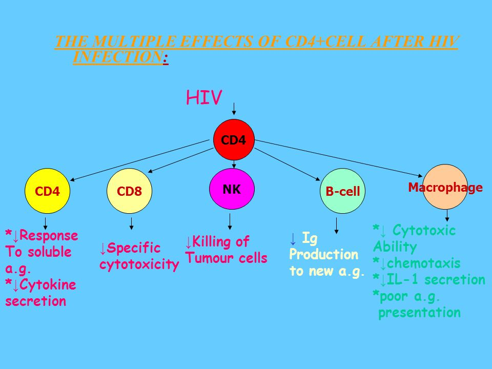 THE MULTIPLE EFFECTS OF CD4+CELL AFTER HIV INFECTION:
