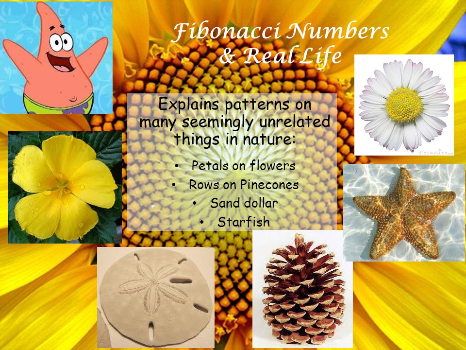 Fibonacci Numbers & Real Life