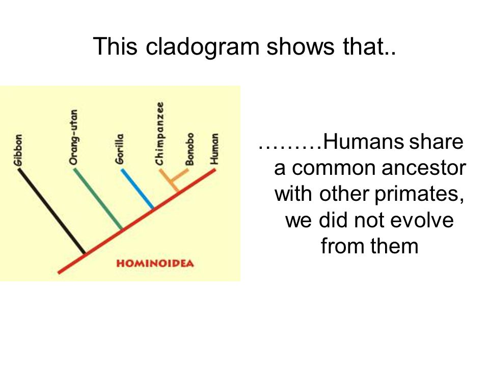 This cladogram shows that..