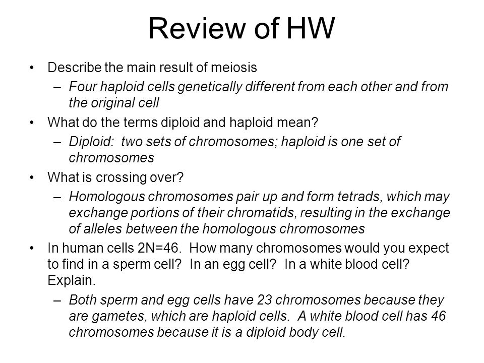 Review of HW Describe the main result of meiosis