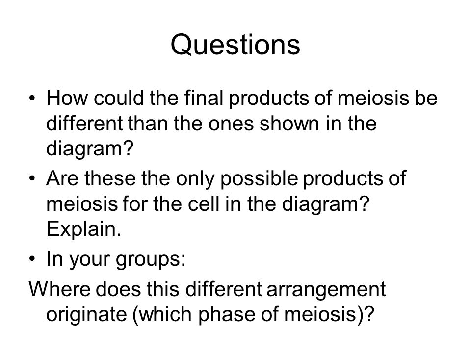 Questions How could the final products of meiosis be different than the ones shown in the diagram