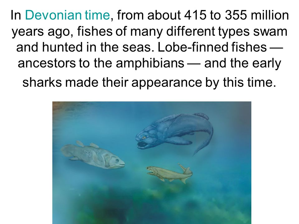 In Devonian time, from about 415 to 355 million years ago, fishes of many different types swam and hunted in the seas.