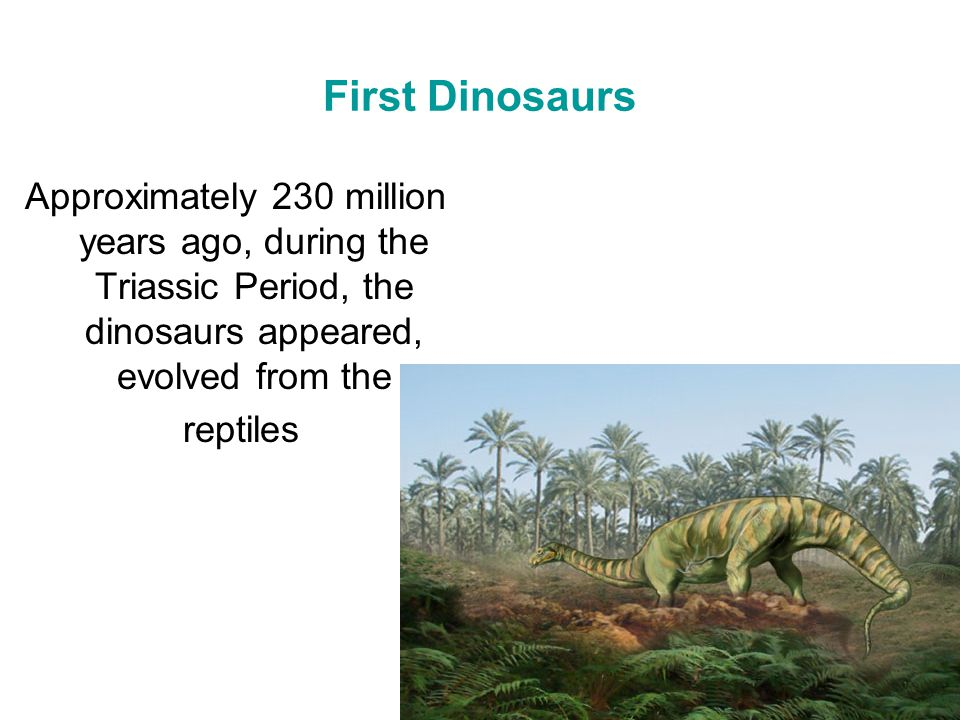 First Dinosaurs Approximately 230 million years ago, during the Triassic Period, the dinosaurs appeared, evolved from the.