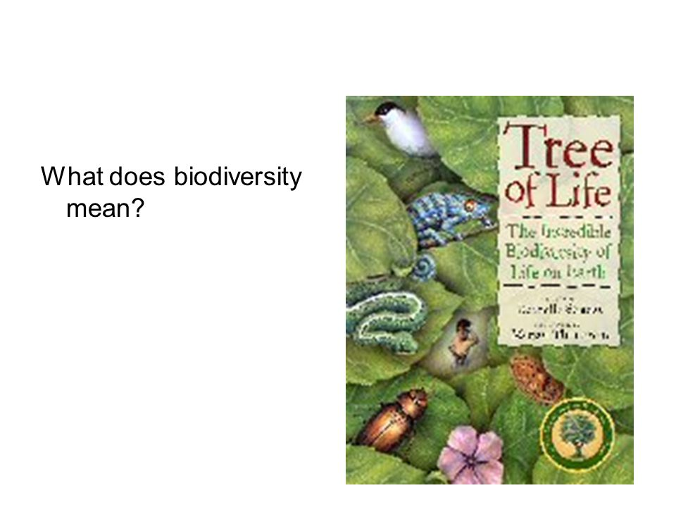 What does biodiversity mean
