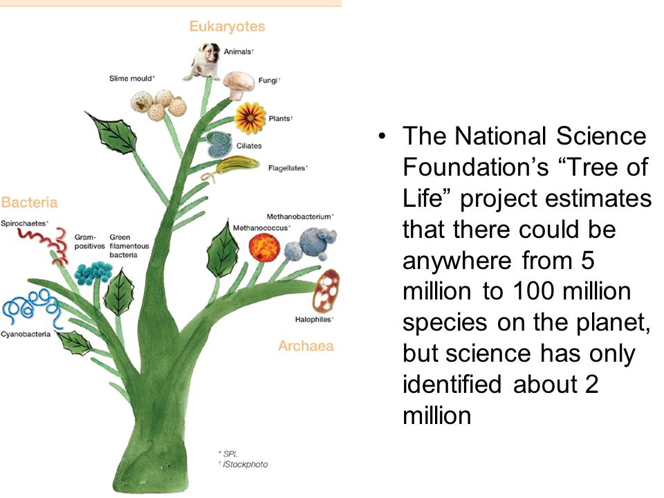 The National Science Foundation's Tree of Life project estimates that there could be anywhere from 5 million to 100 million species on the planet, but science has only identified about 2 million