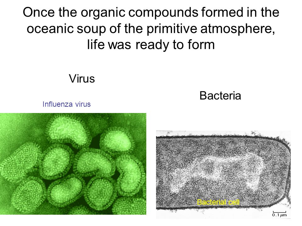 Once the organic compounds formed in the oceanic soup of the primitive atmosphere, life was ready to form