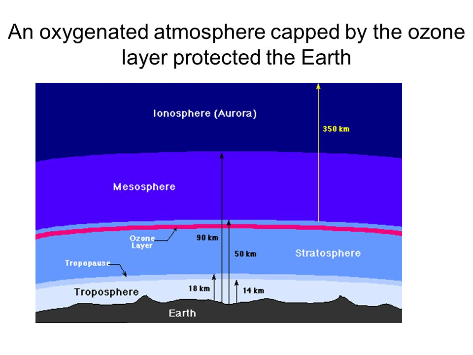 An oxygenated atmosphere capped by the ozone layer protected the Earth
