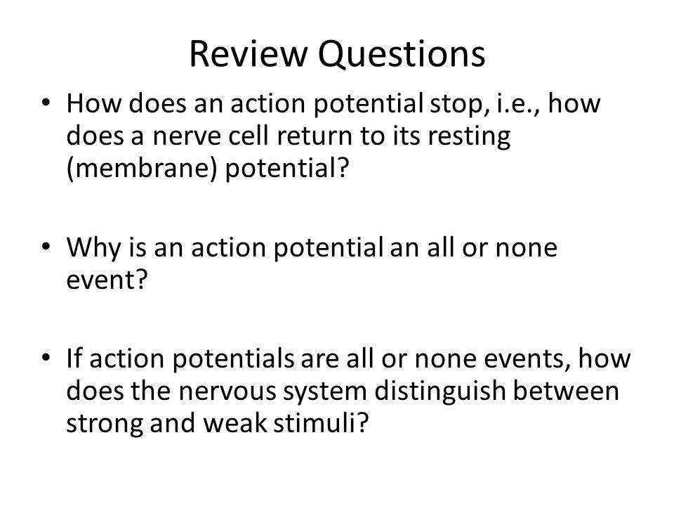 Review Questions How does an action potential stop, i.e., how does a nerve cell return to its resting (membrane) potential
