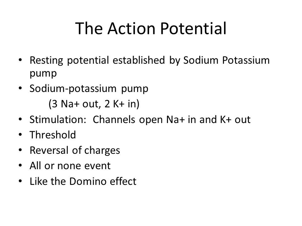 The Action Potential Resting potential established by Sodium Potassium pump. Sodium-potassium pump.