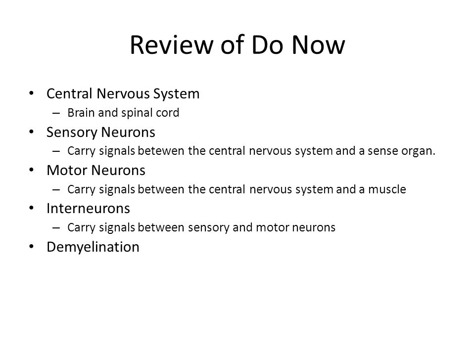 Review of Do Now Central Nervous System Sensory Neurons Motor Neurons