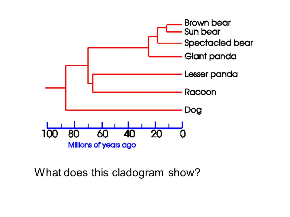 What does this cladogram show