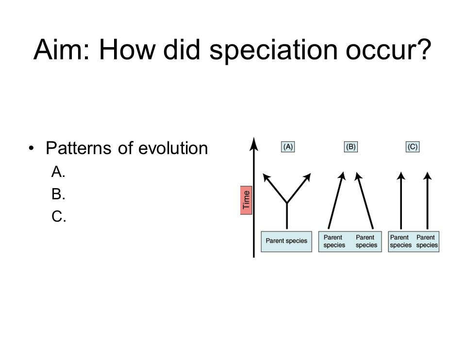 Aim: How did speciation occur