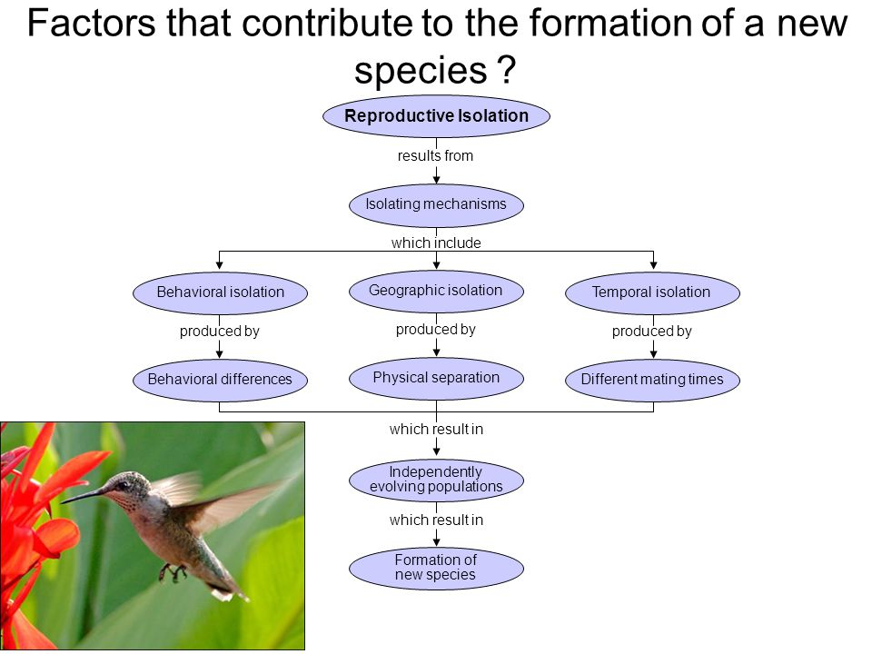 Factors that contribute to the formation of a new species