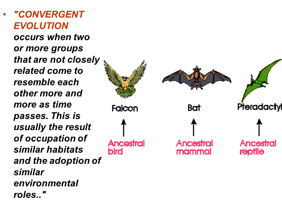 CONVERGENT EVOLUTION occurs when two or more groups that are not closely related come to resemble each other more and more as time passes.