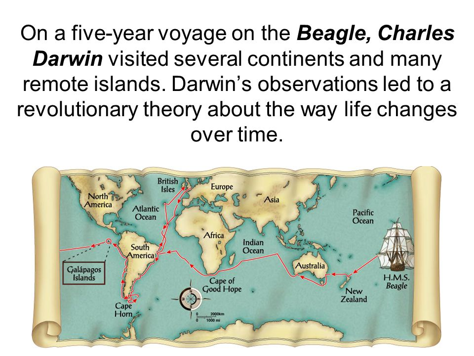 On a five-year voyage on the Beagle, Charles Darwin visited several continents and many remote islands. Darwin's observations led to a revolutionary theory about the way life changes over time.