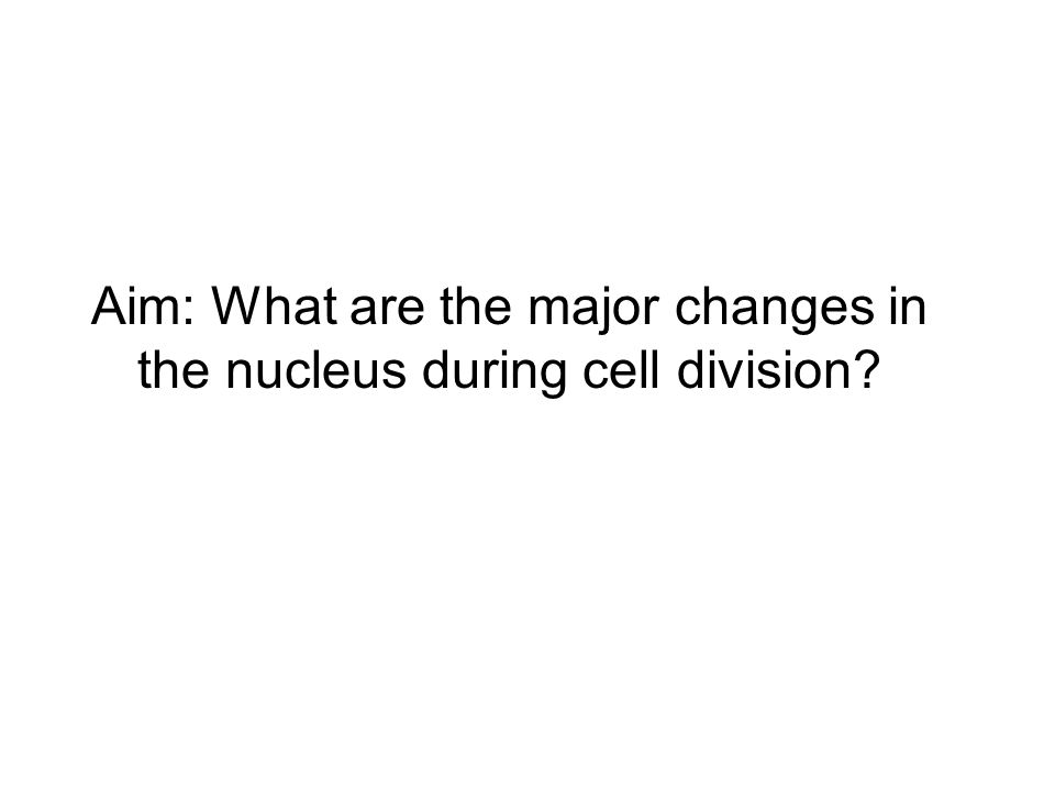Aim: What are the major changes in the nucleus during cell division